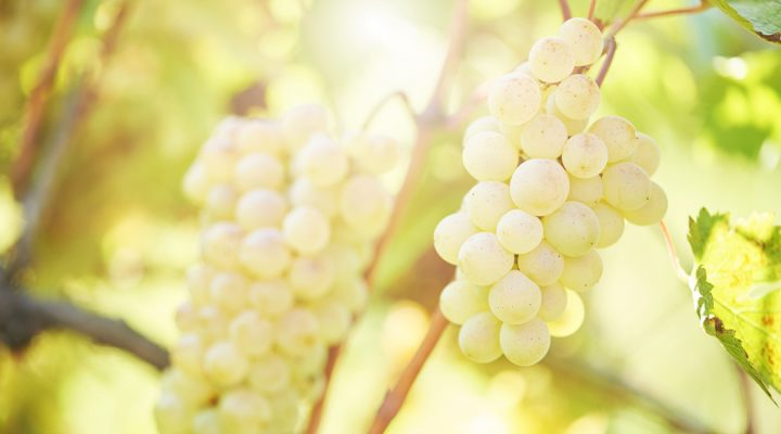 Five things to know about Sauvignon Blanc